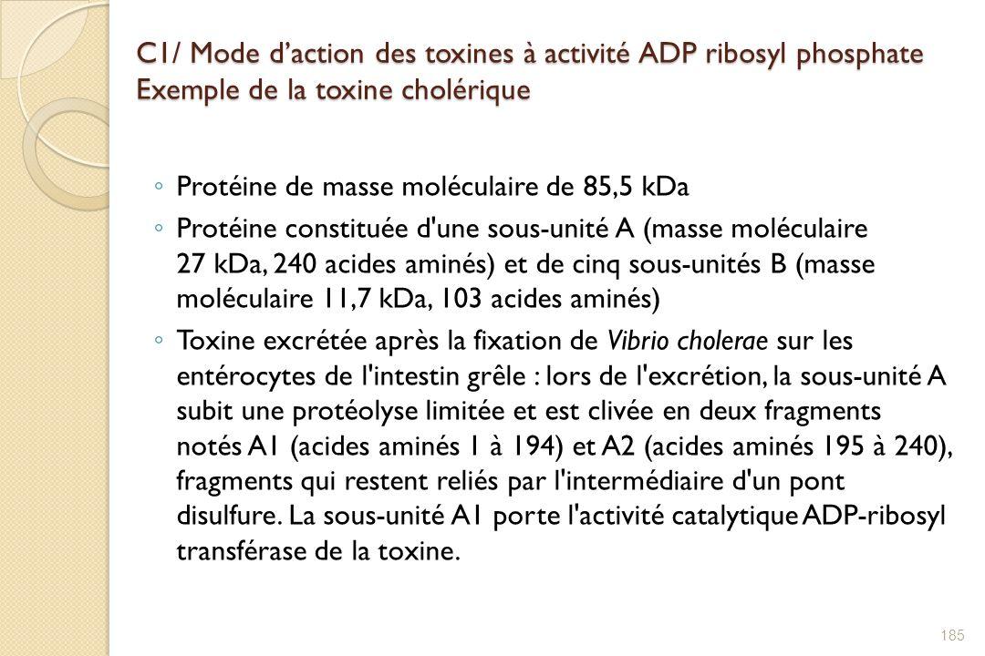 C1/ Mode d'action des toxines à activité ADP ribosyl phosphate Exemple de la toxine cholérique