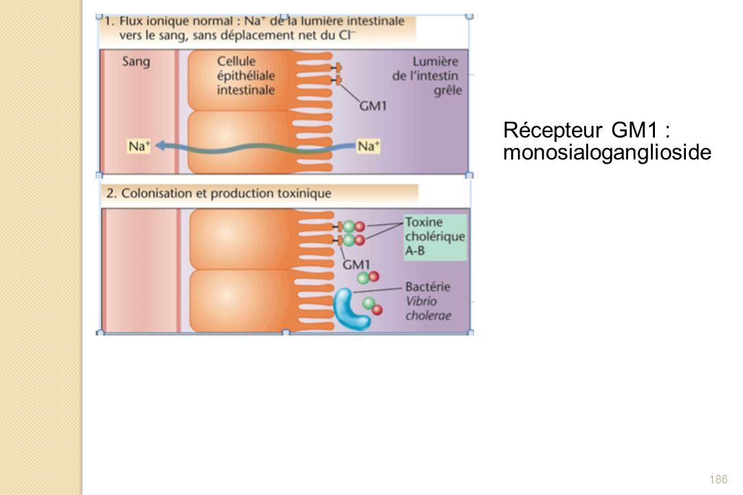 Récepteur GM1 : monosialoganglioside