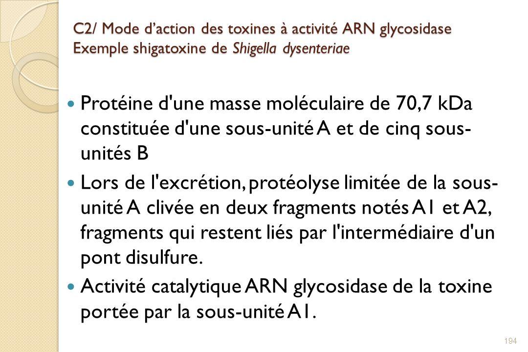 C2/ Mode d'action des toxines à activité ARN glycosidase Exemple shigatoxine de Shigella dysenteriae
