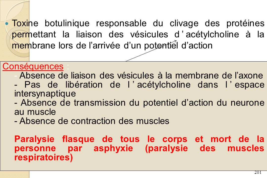 Toxine botulinique responsable du clivage des protéines permettant la liaison des vésicules d'acétylcholine à la membrane lors de l'arrivée d'un potentiel d'action