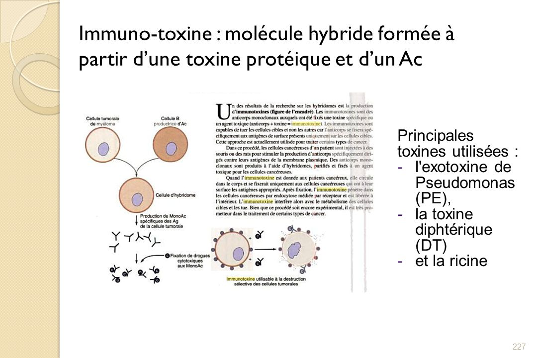 Immuno-toxine : molécule hybride formée à partir d'une toxine protéique et d'un Ac
