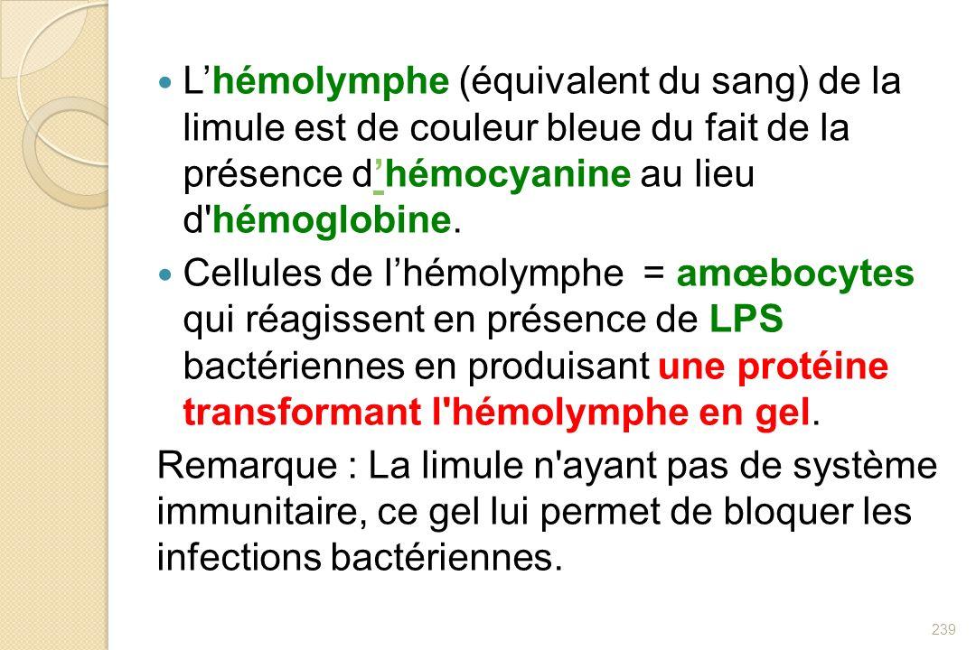L'hémolymphe (équivalent du sang) de la limule est de couleur bleue du fait de la présence d'hémocyanine au lieu d hémoglobine.