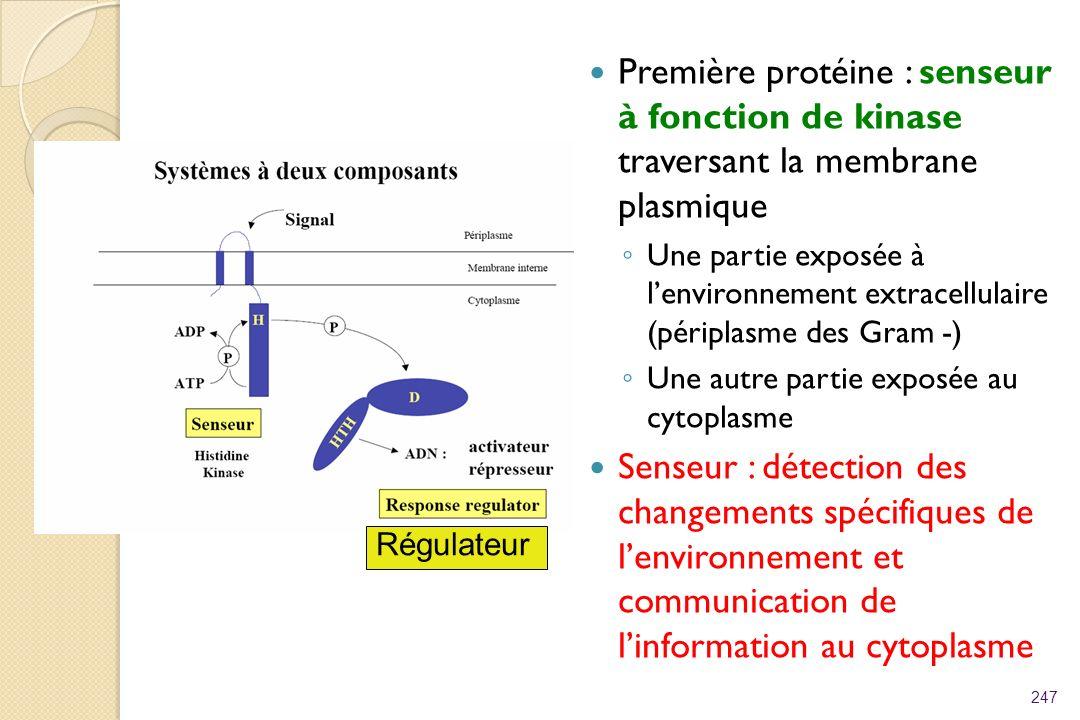 Première protéine : senseur à fonction de kinase traversant la membrane plasmique