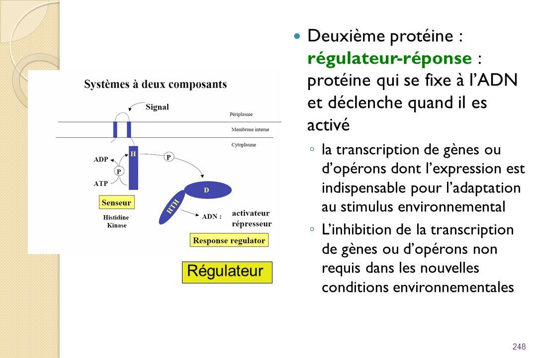 Deuxième protéine : régulateur-réponse : protéine qui se fixe à l'ADN et déclenche quand il es activé