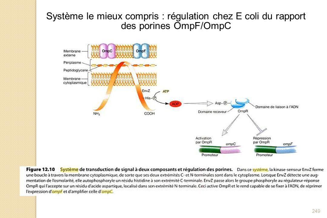 Système le mieux compris : régulation chez E coli du rapport des porines OmpF/OmpC