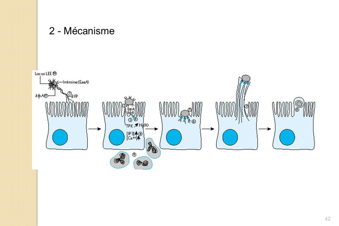 2 - Mécanisme