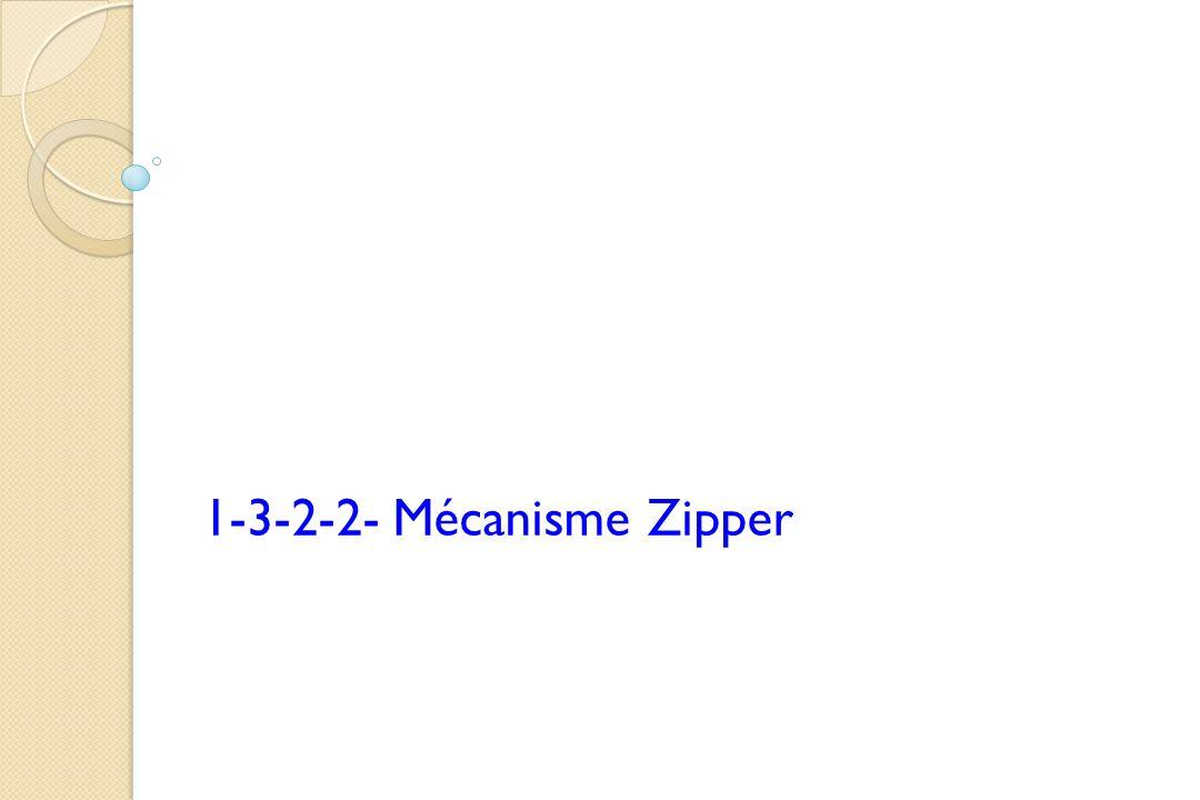 1-3-2-2- Mécanisme Zipper