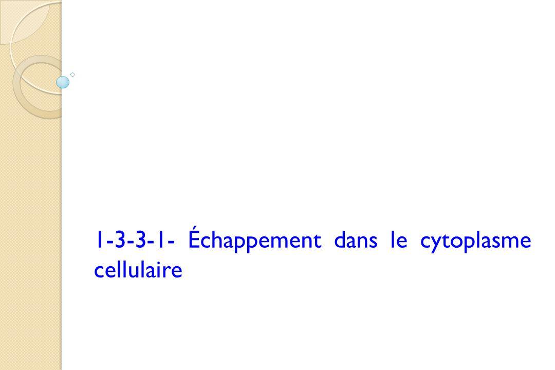 1-3-3-1- Échappement dans le cytoplasme cellulaire