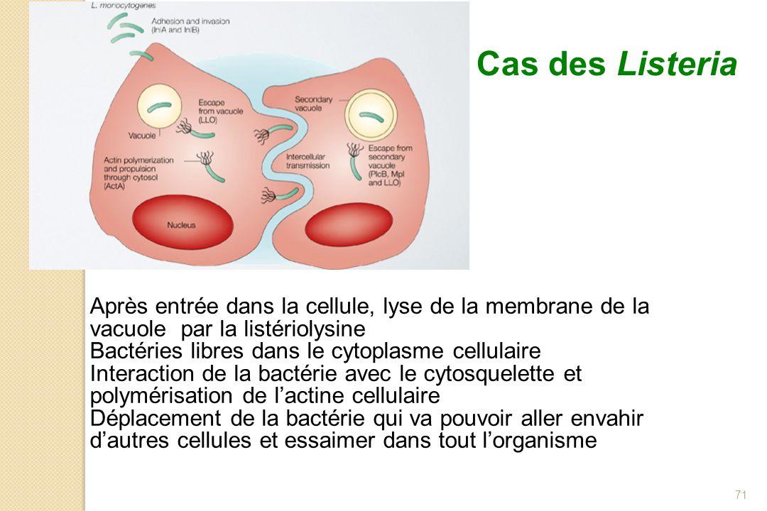 Cas des Listeria Après entrée dans la cellule, lyse de la membrane de la vacuole par la listériolysine.
