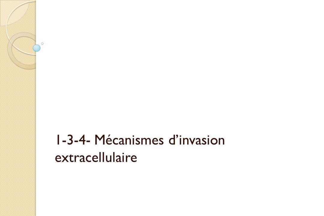 1-3-4- Mécanismes d'invasion extracellulaire