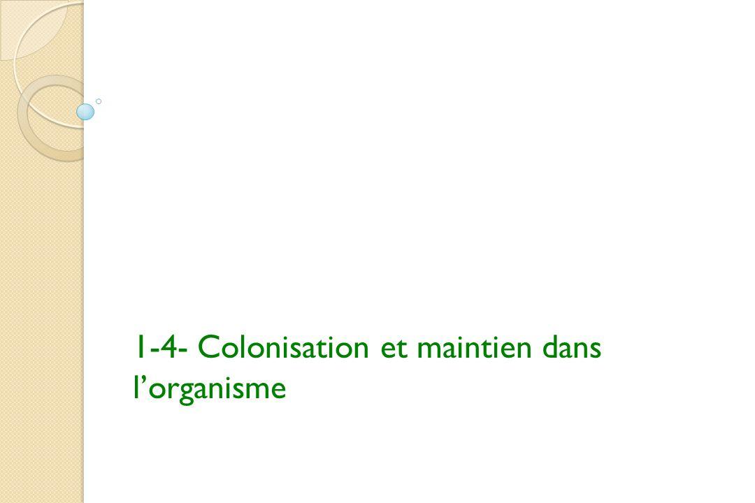 1-4- Colonisation et maintien dans l'organisme