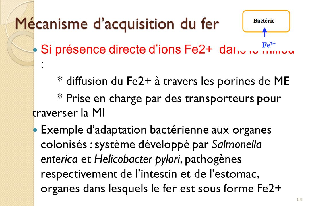 Mécanisme d'acquisition du fer