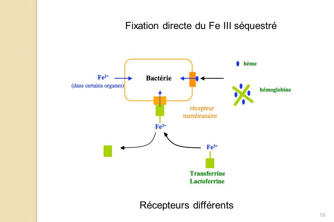 Fixation directe du Fe III séquestré