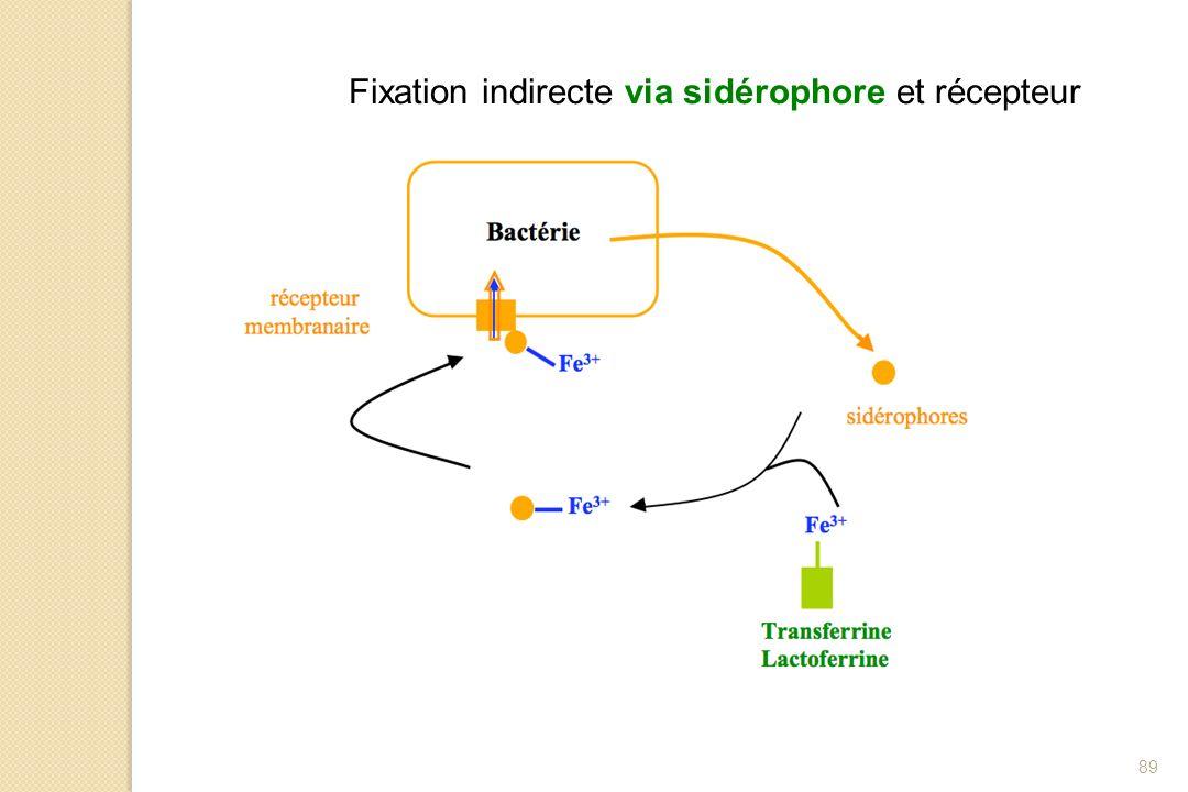Fixation indirecte via sidérophore et récepteur