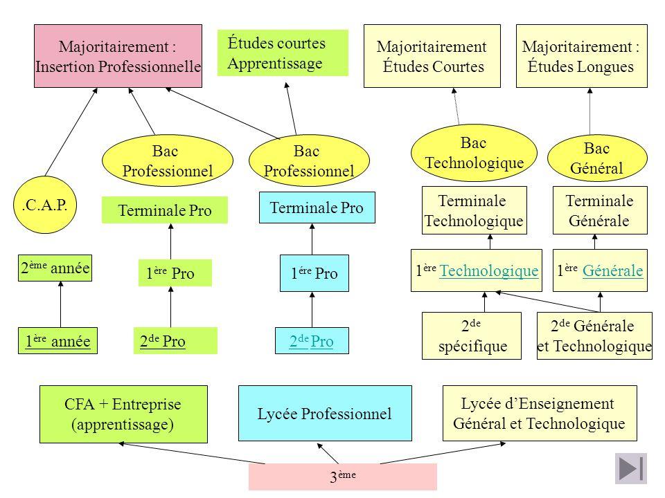 Insertion Professionnelle Majoritairement Études Courtes