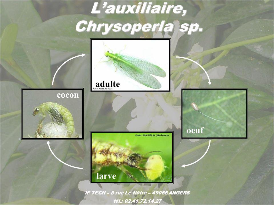 L'auxiliaire, Chrysoperla sp.