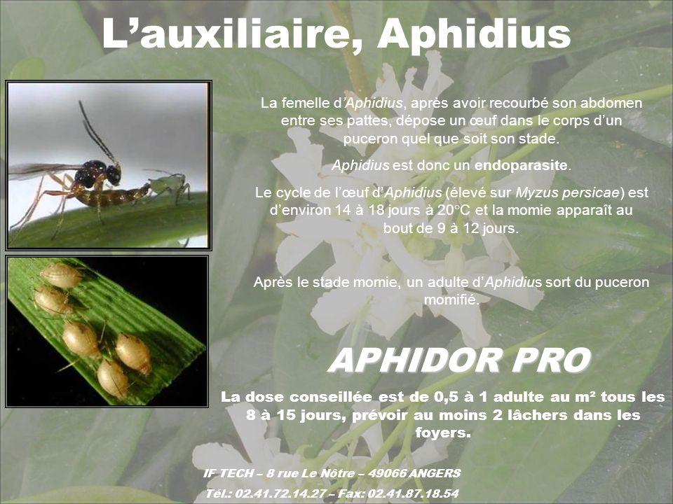 L'auxiliaire, Aphidius