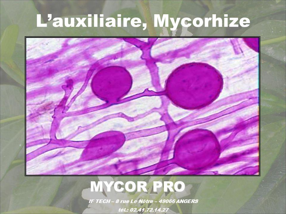 L'auxiliaire, Mycorhize