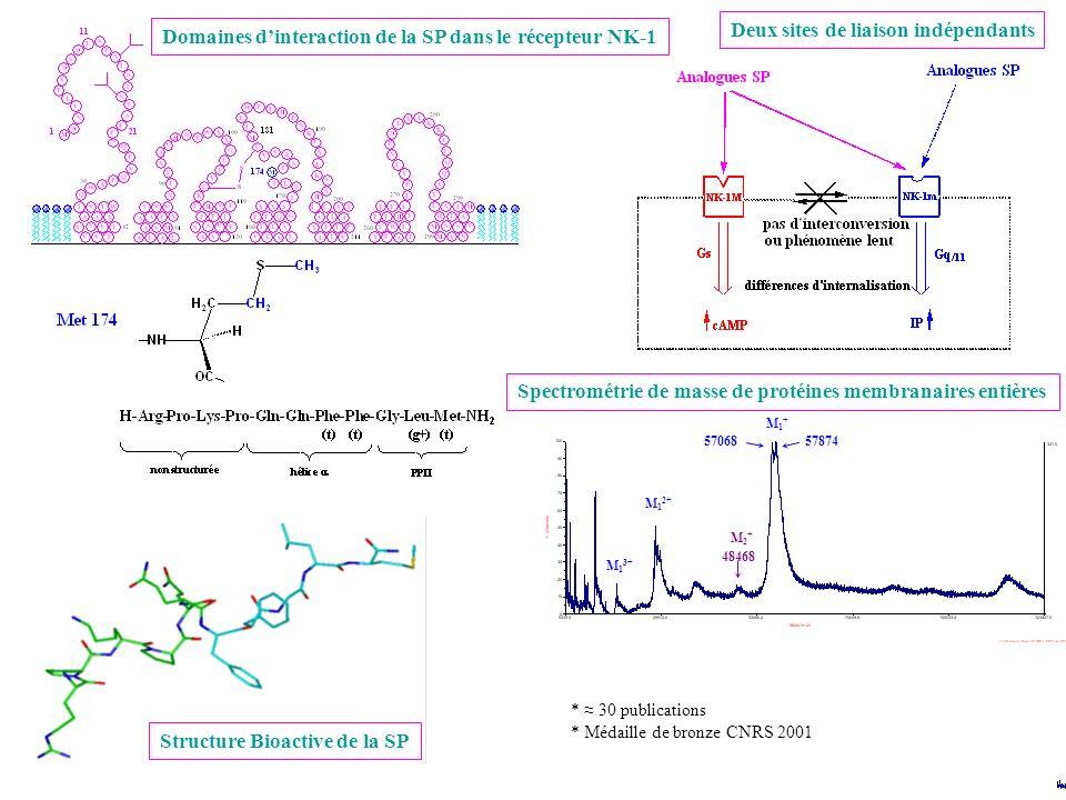 Domaines d'interaction de la SP dans le récepteur NK-1