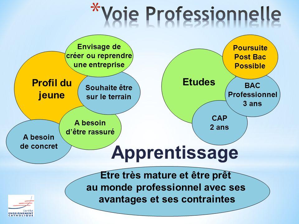 Voie Professionnelle Apprentissage Etudes Profil du jeune
