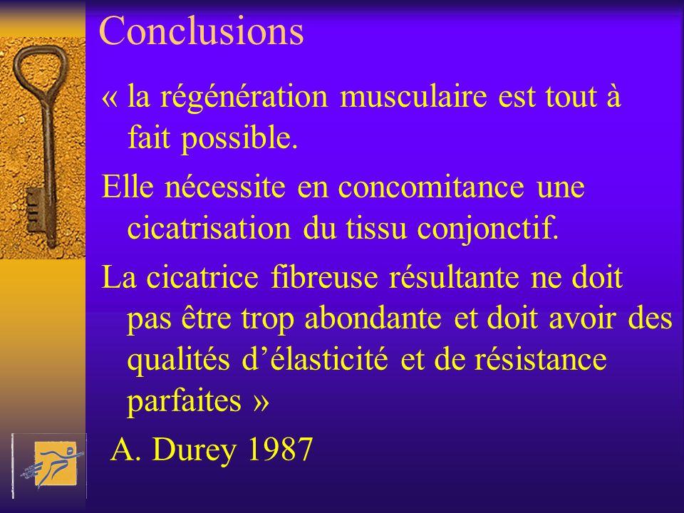Conclusions « la régénération musculaire est tout à fait possible.