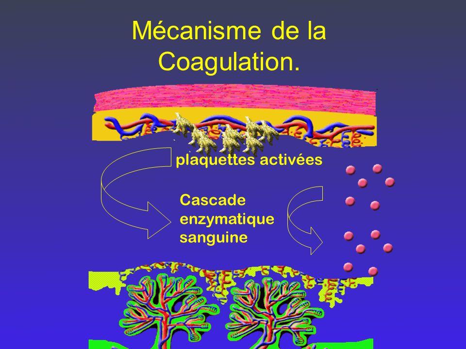 Mécanisme de la Coagulation.