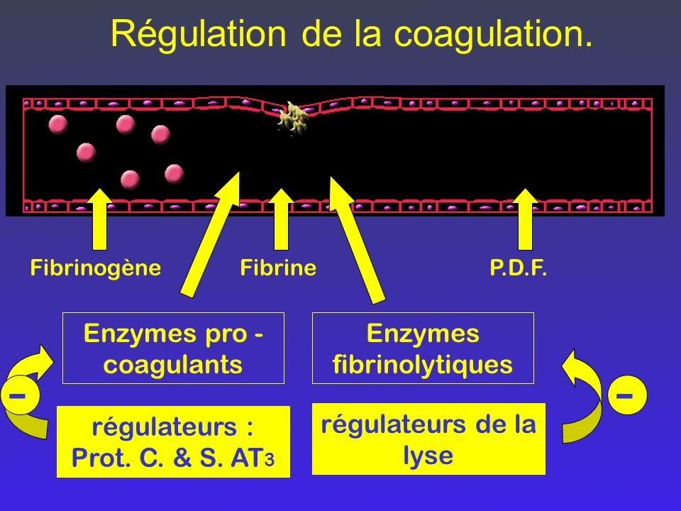 - - Régulation de la coagulation. Enzymes pro -coagulants