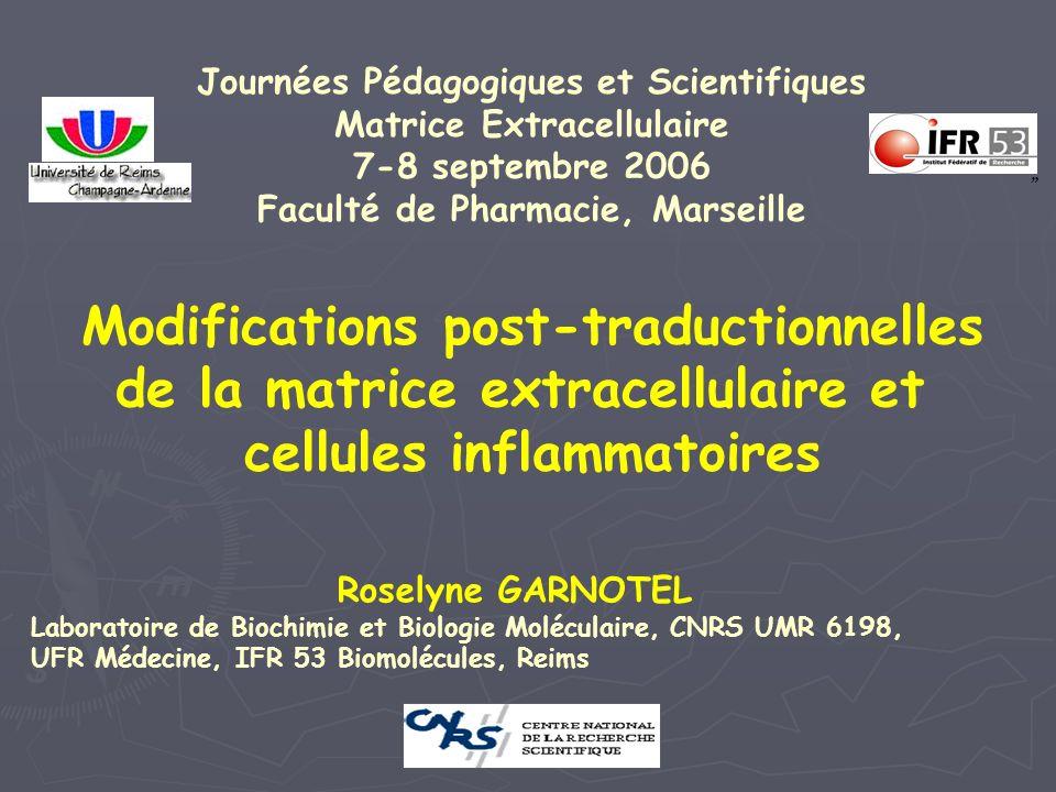 Modifications post-traductionnelles de la matrice extracellulaire et