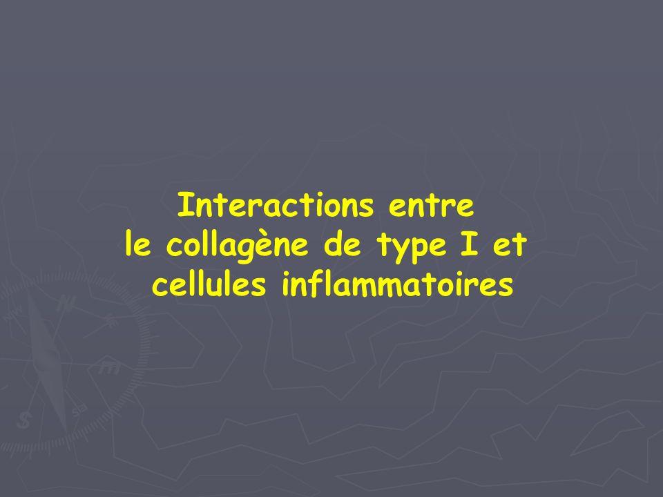 le collagène de type I et cellules inflammatoires