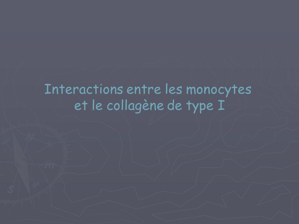 Interactions entre les monocytes et le collagène de type I