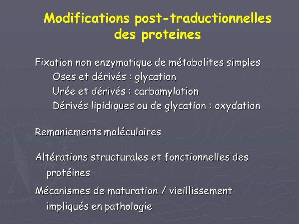 Modifications post-traductionnelles des proteines