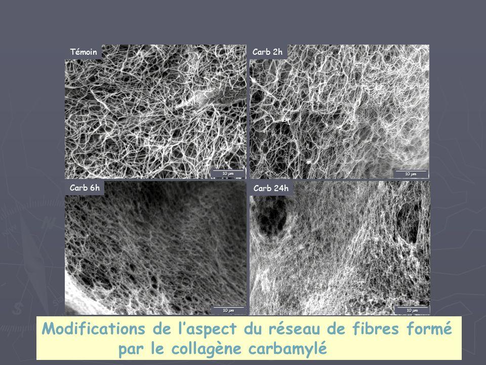 Modifications de l'aspect du réseau de fibres formé