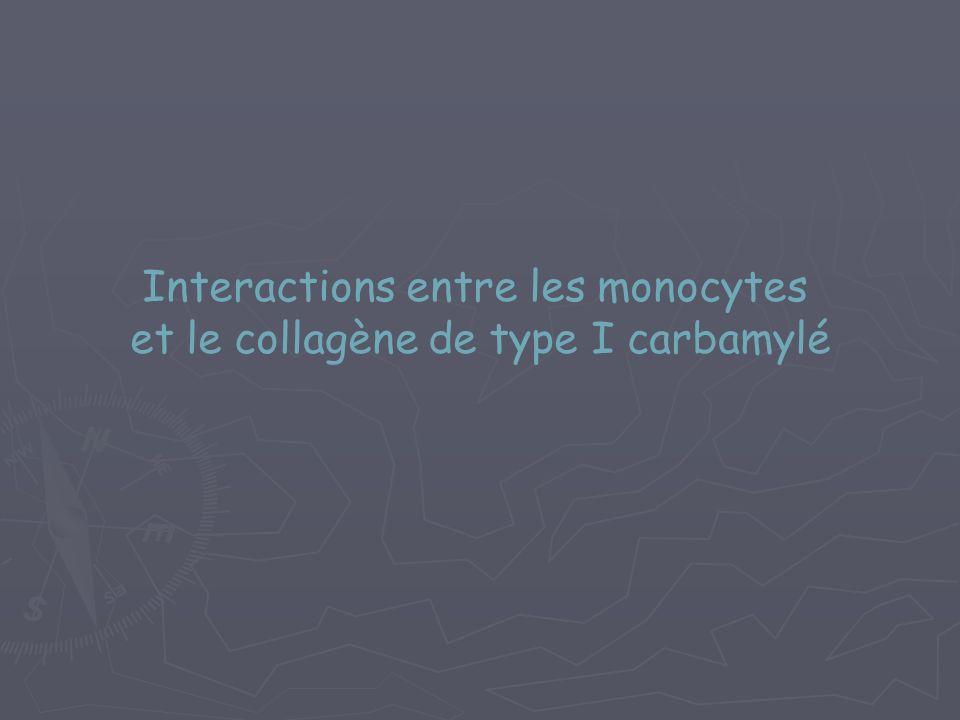 Interactions entre les monocytes et le collagène de type I carbamylé