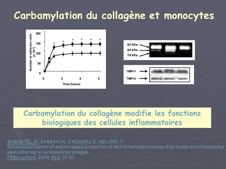 Carbamylation du collagène et monocytes