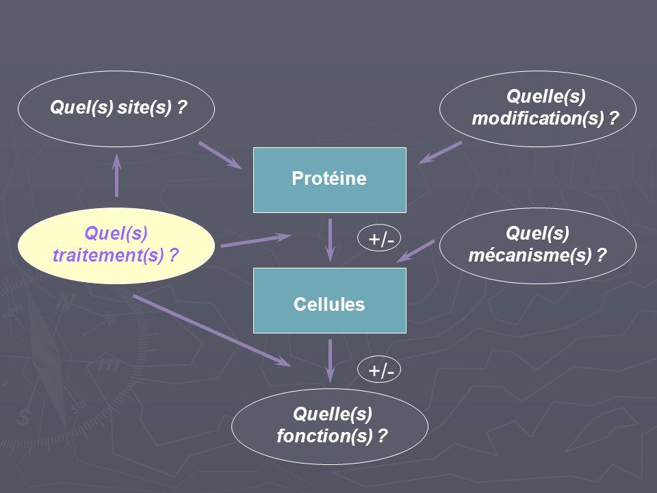 +/- Quel(s) site(s) Quelle(s) modification(s) Protéine