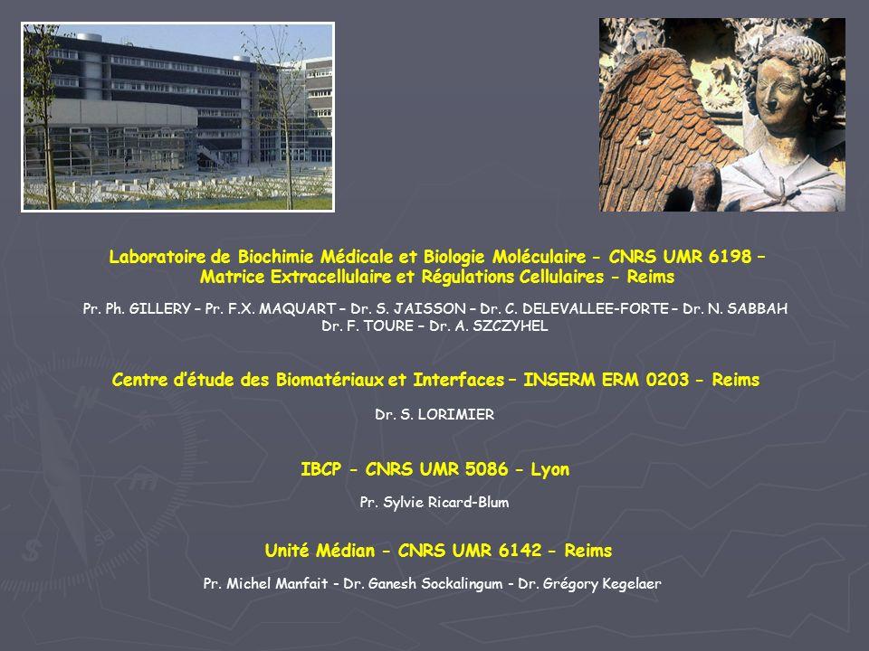 Matrice Extracellulaire et Régulations Cellulaires - Reims