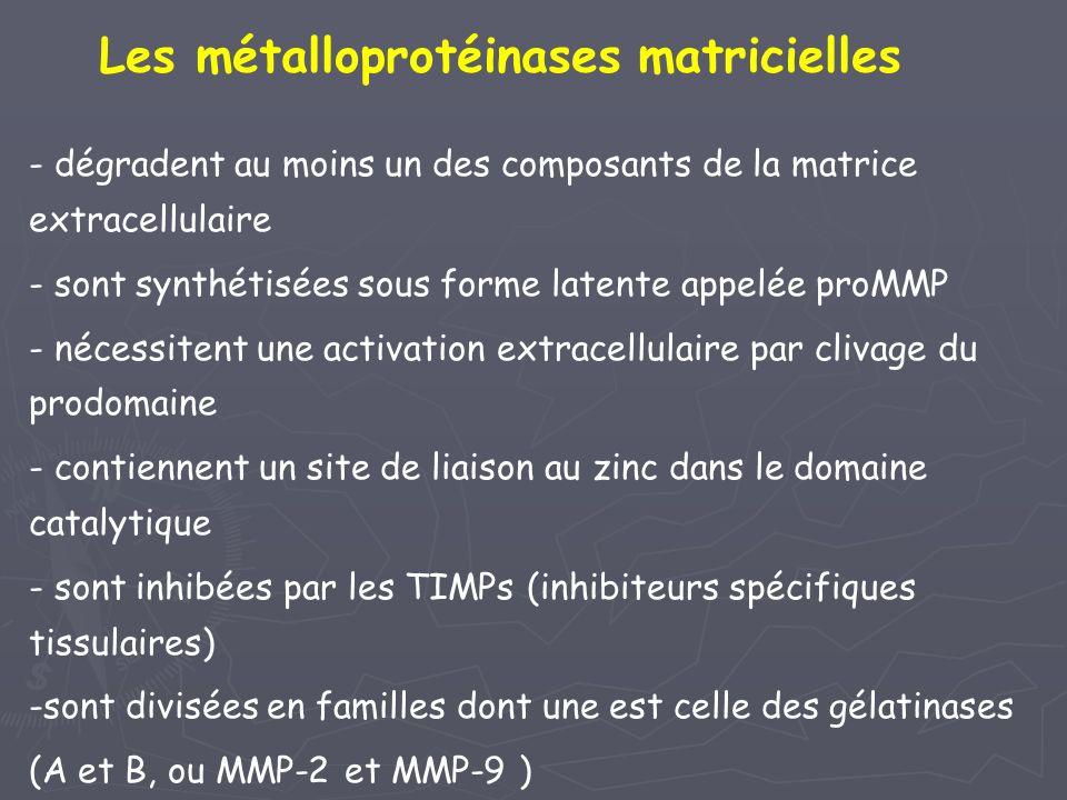 Les métalloprotéinases matricielles
