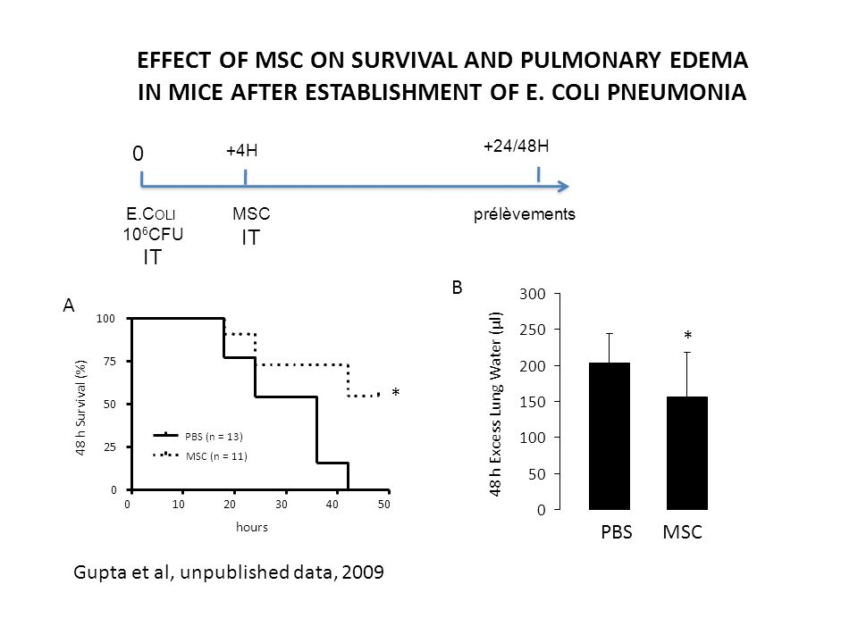 EFFECT OF MSC ON SURVIVAL AND PULMONARY EDEMA