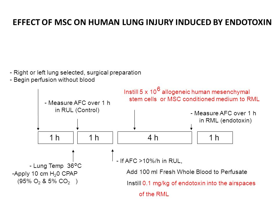 EFFECT OF MSC ON HUMAN LUNG INJURY INDUCED BY ENDOTOXIN