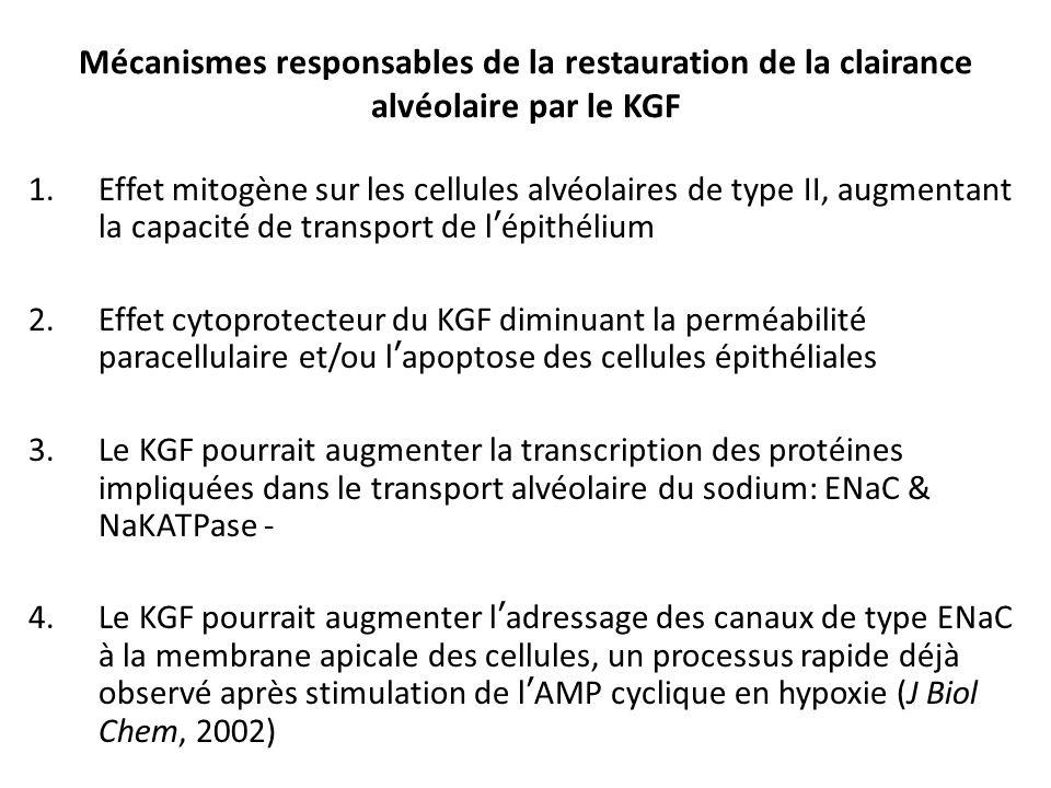 Mécanismes responsables de la restauration de la clairance alvéolaire par le KGF