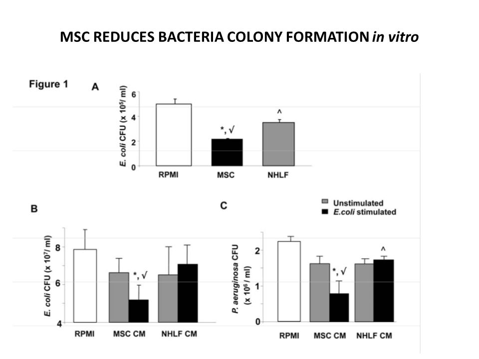 MSC REDUCES BACTERIA COLONY FORMATION in vitro