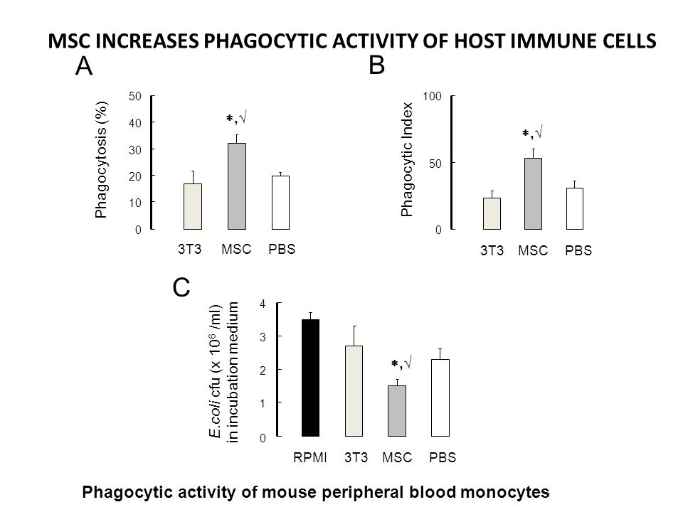MSC INCREASES PHAGOCYTIC ACTIVITY OF HOST IMMUNE CELLS