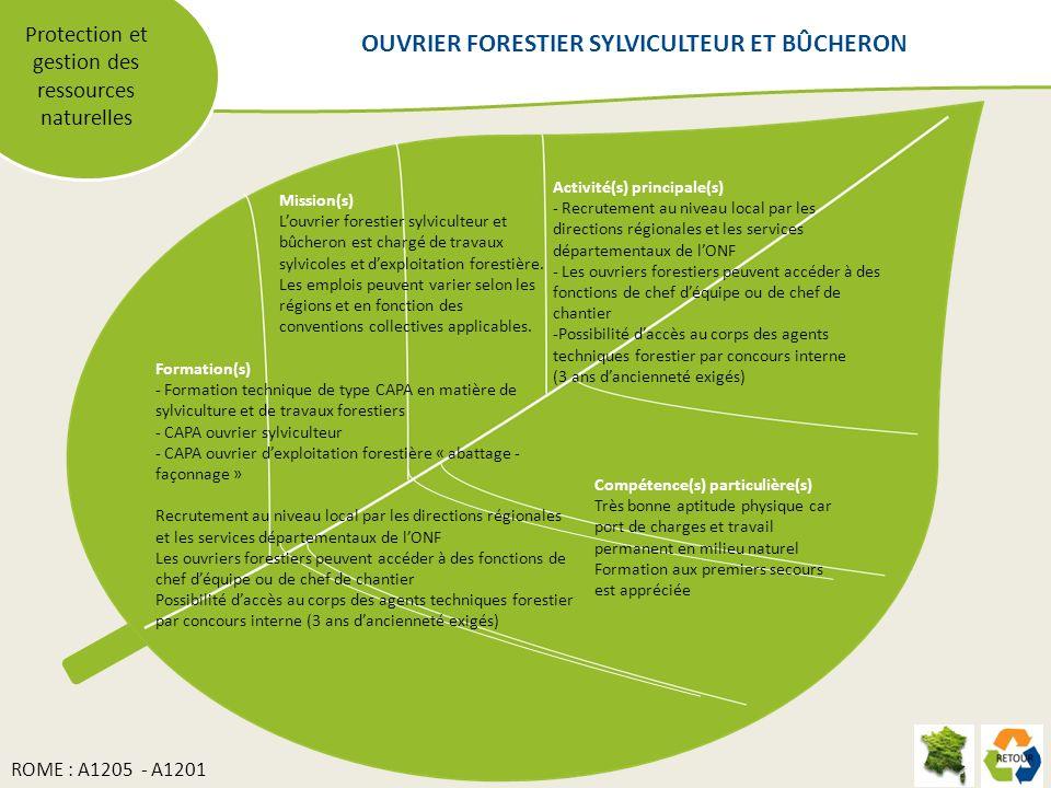 OUVRIER FORESTIER SYLVICULTEUR ET BÛCHERON