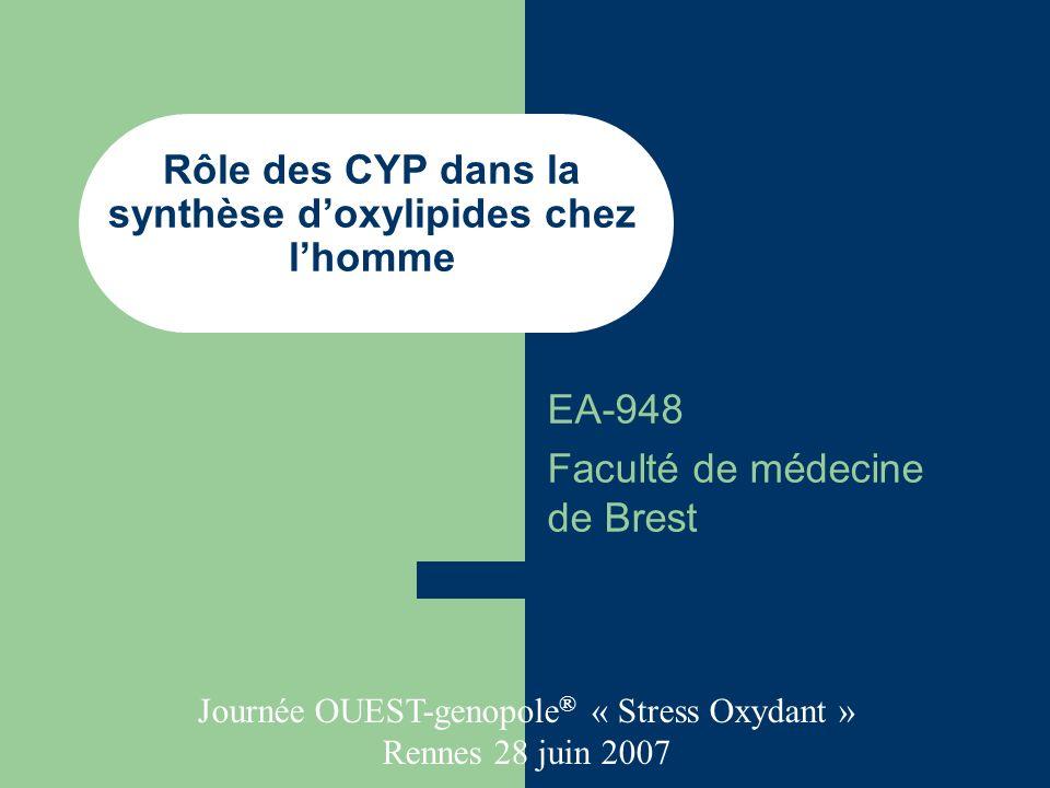 Rôle des CYP dans la synthèse d'oxylipides chez l'homme