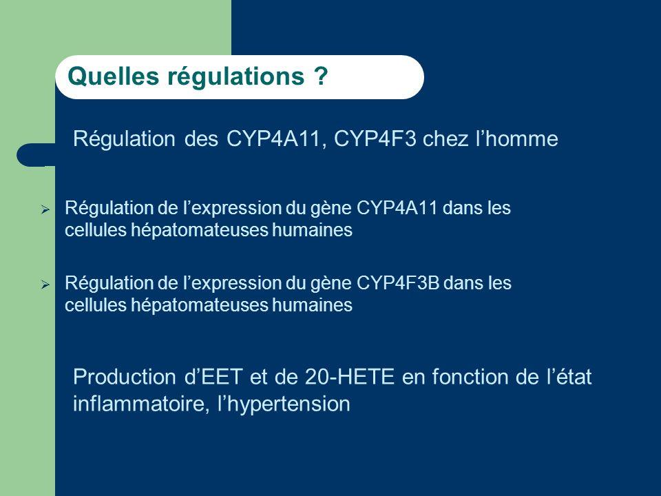 Quelles régulations Régulation des CYP4A11, CYP4F3 chez l'homme