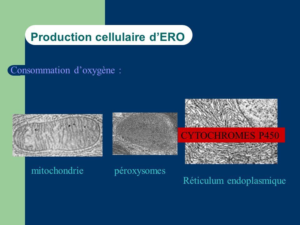 Production cellulaire d'ERO