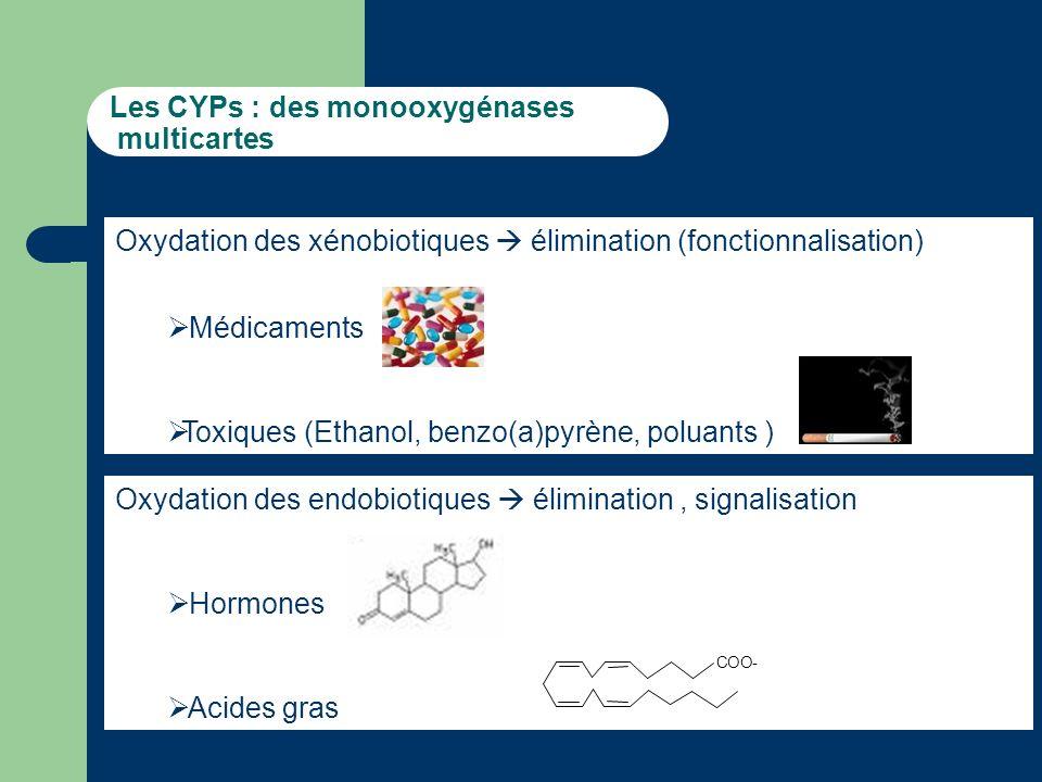 Les CYPs : des monooxygénases multicartes