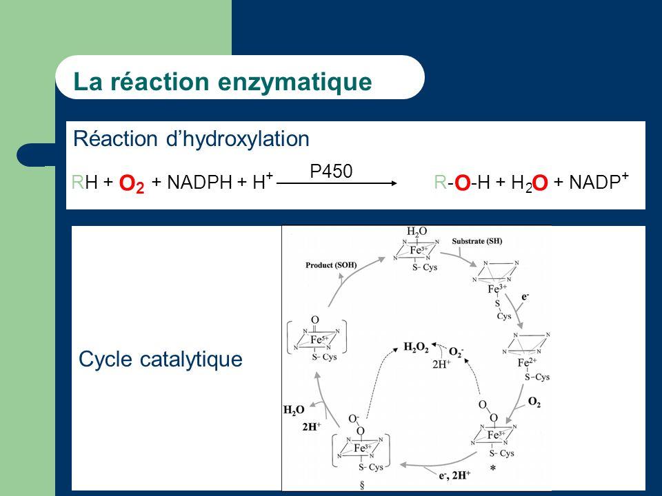 La réaction enzymatique