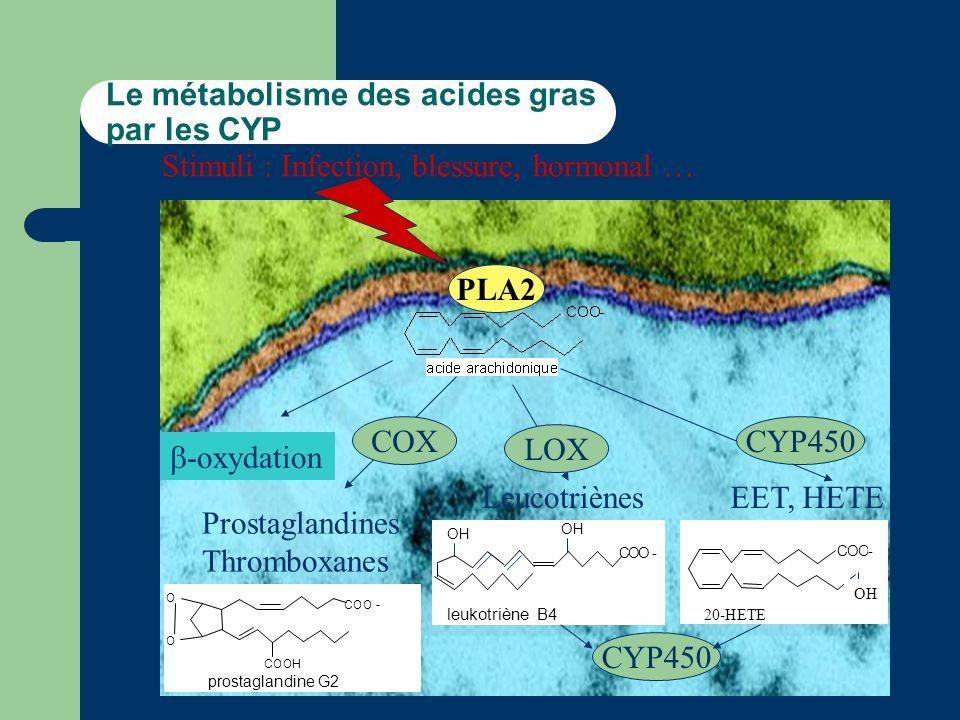 Le métabolisme des acides gras par les CYP