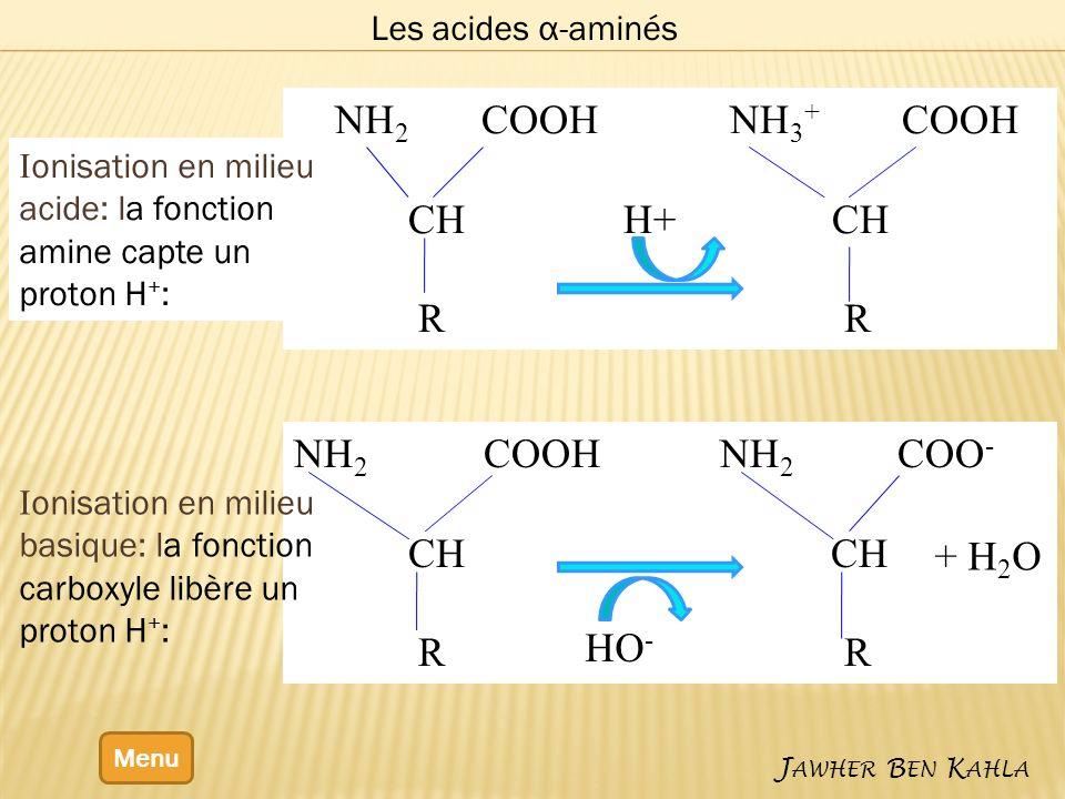 NH2 COOH NH3+ COOH CH H+ CH R R NH2 COOH NH2 COO- CH CH R R + H2O HO-